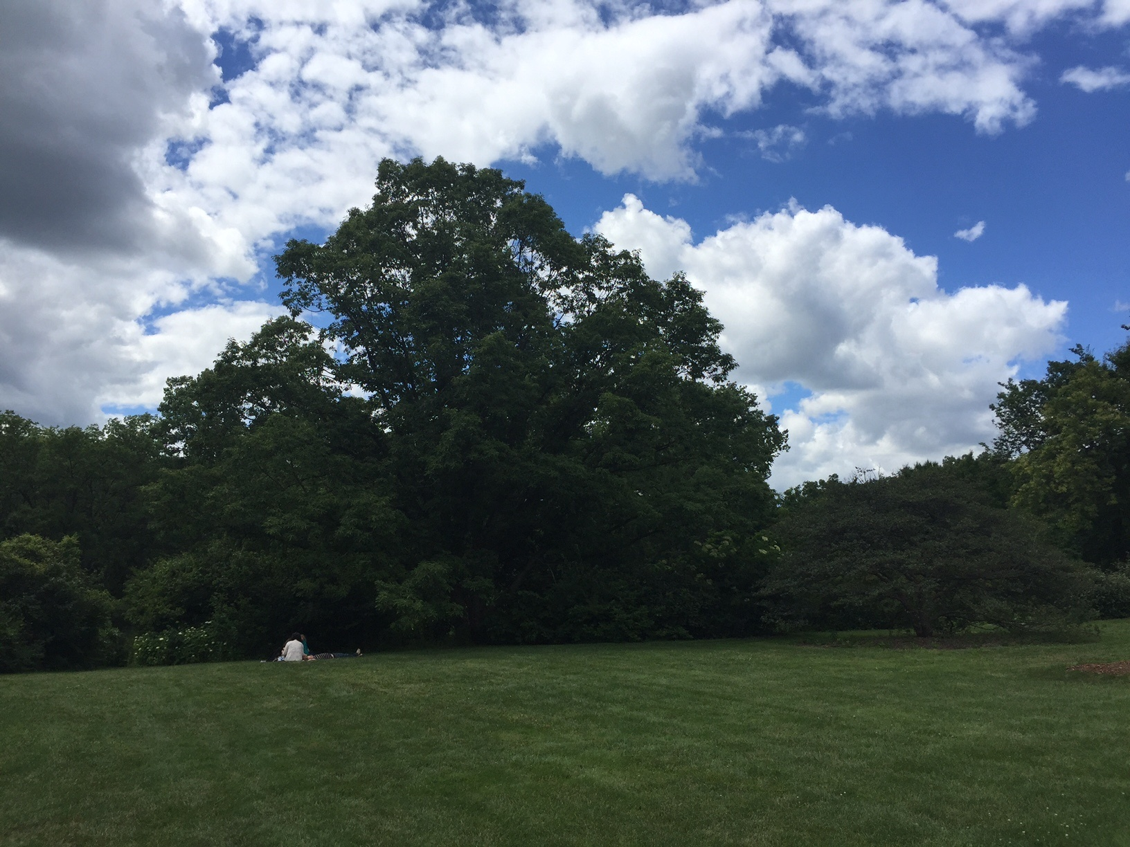 tree wide.jpg